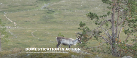 Arctic Domus team member Anna-Kaisa Salmi launches new ERC project on domestication
